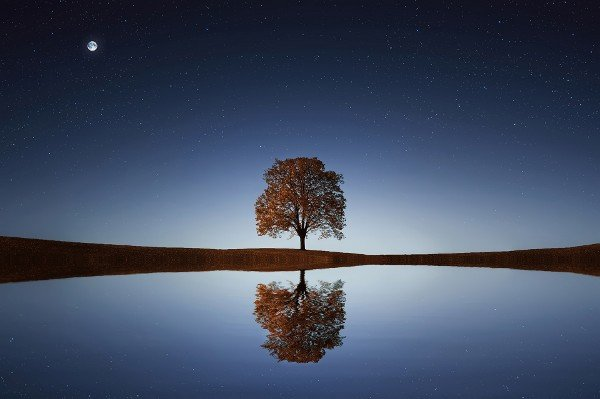 Peaceful scene with a single tree reflected in still water, and a starry sky and moon above.